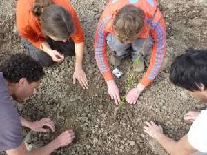 In een kring worden de zaadjes zorgvuldig gezaaid.